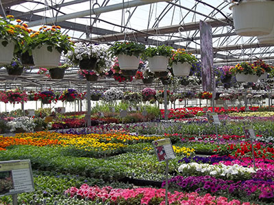 Good Harvest Farms Greenhouse